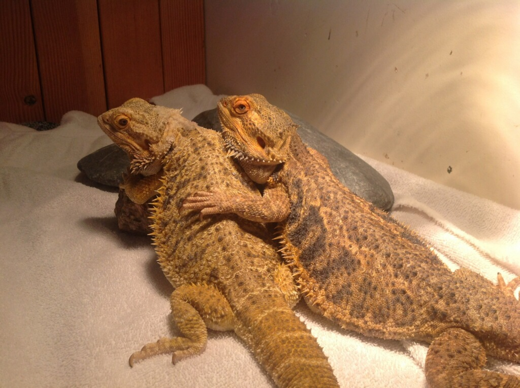 The Odd Pet Vet offers Affordable, Quality care for all your Exotic Pets!!