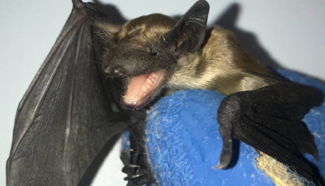 Everything You Wanted to Know About Bats