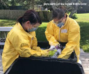 new-bedford-diesel-spill-bird-bath