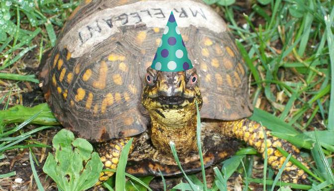 birthday-party-idea-south-shore