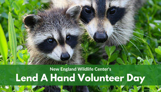 VOLUNTEERS NEEDED: Lend A Hand Volunteer Day at NEWC!