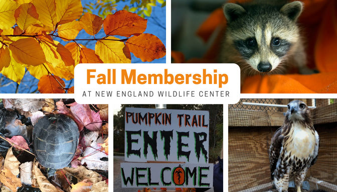 New Fall Memberships Available at New England Wildlife Center!