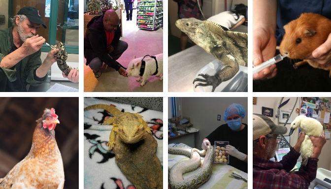odd-pet-vet-exotic-animal-clinic-header