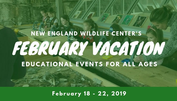 Something Wild's Happening at New England Wildlife Center During February School Vacation